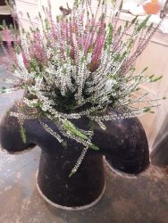Large, interesting Chimney/planter £30