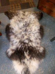 Large Sheepskins Rare Breed - £35