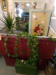 Tin Trunks - Good Planters - £20